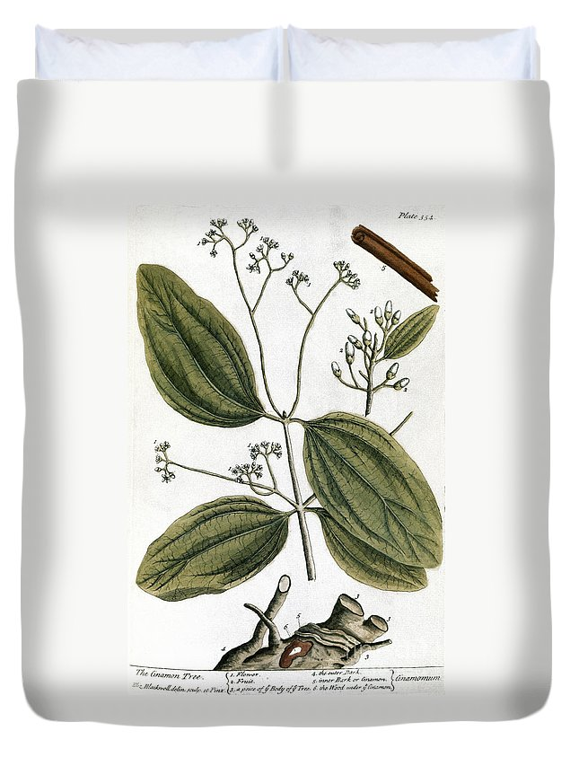 1730s Duvet Cover featuring the photograph Cinnamon Tree, 1735 by Granger
