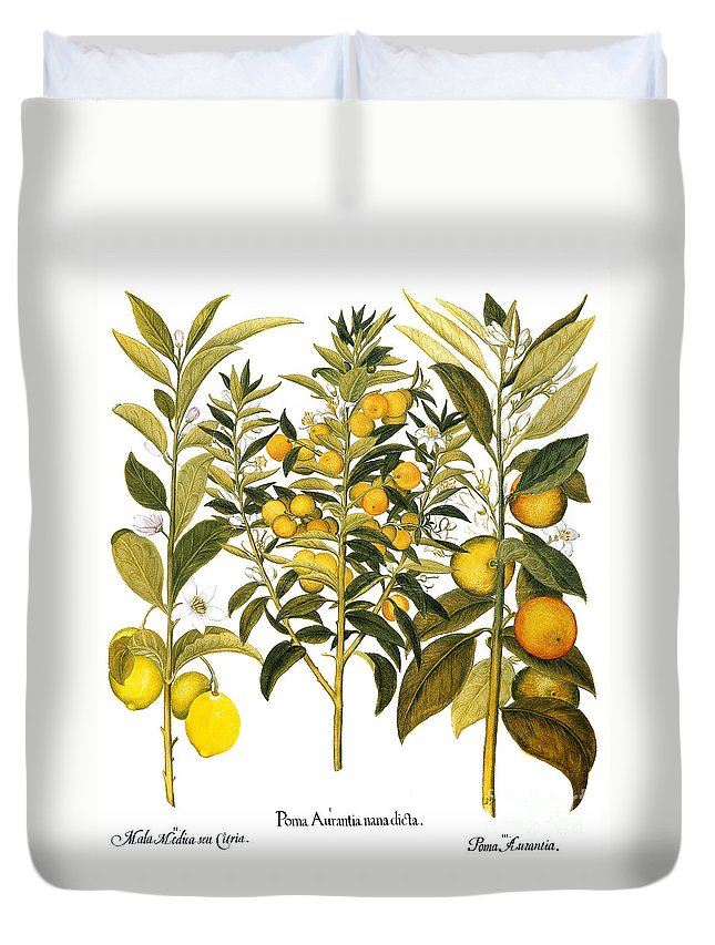 1613 Duvet Cover featuring the photograph Citron And Orange, 1613 by Granger