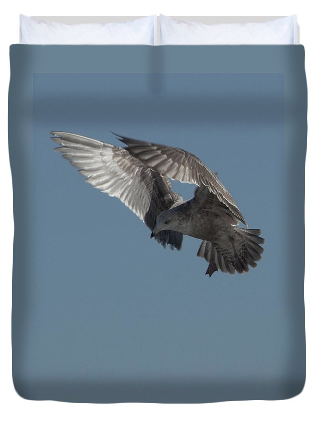Seagull Duvet Cover featuring the photograph Clams For Dinner 3 by Steven Natanson