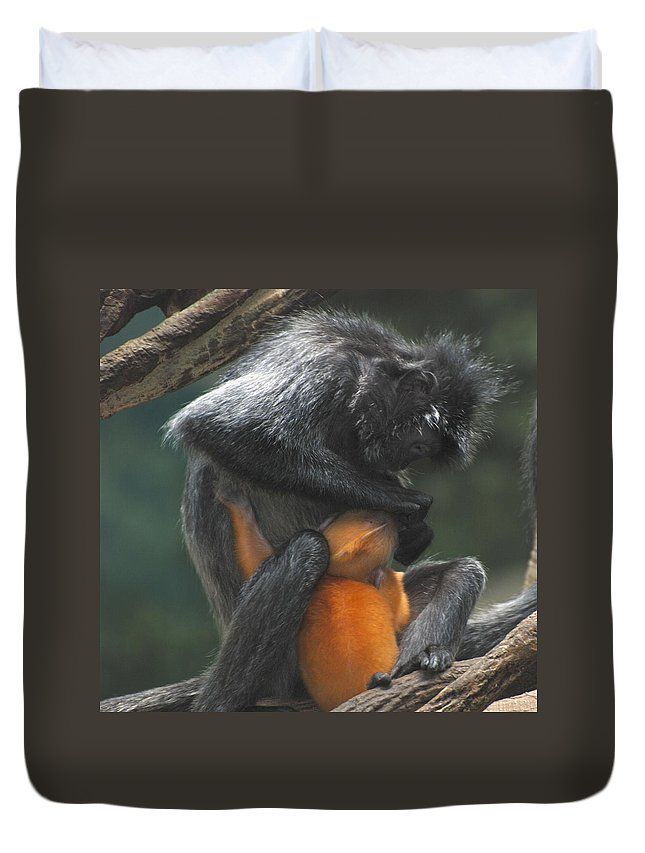 Monkey Duvet Cover featuring the photograph Cleaning Baby by Richard Bryce and Family