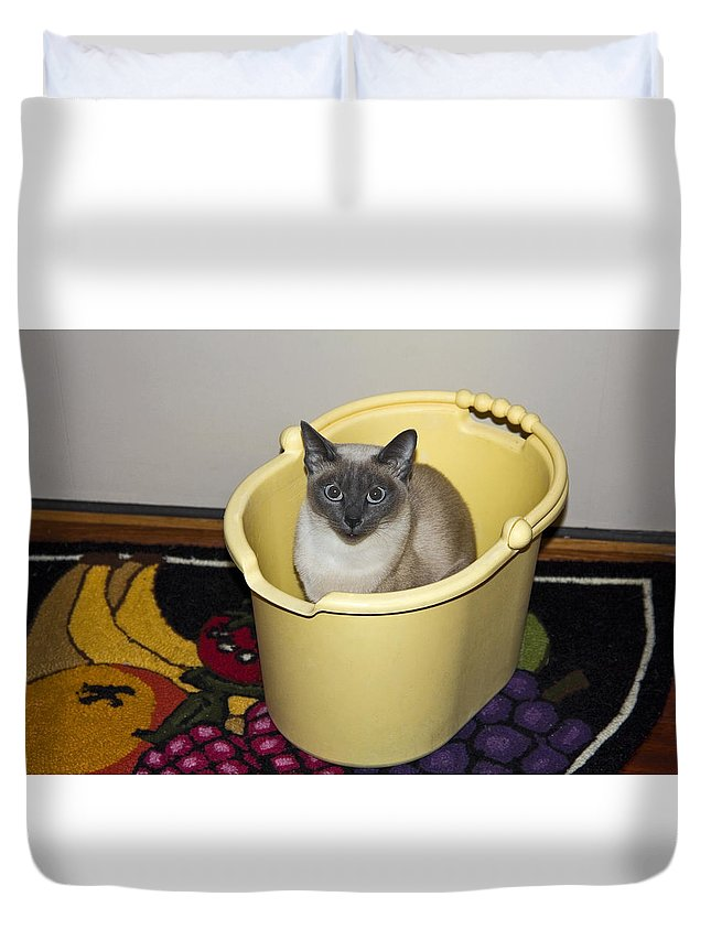 Tonkinese Cat Duvet Cover featuring the photograph Cleaning Cat by Sally Weigand