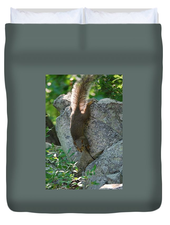 Squirrel Duvet Cover featuring the photograph Cliff Hanger by Eric Liller