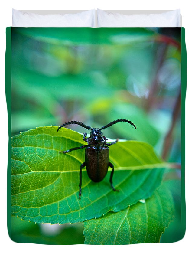 Coleoptera Duvet Cover featuring the photograph Climbing Beetle by Douglas Barnett