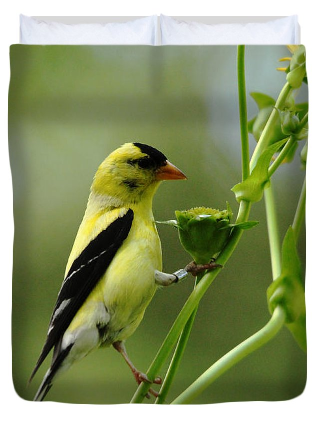 Goldfinches Duvet Cover featuring the photograph Clinging Goldfinch by Debbie Oppermann