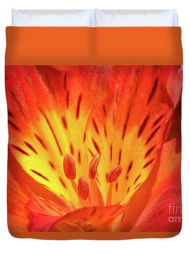 Close-up Duvet Cover featuring the photograph Close-up Of A Peruvian Lily by Mimi Ditchie