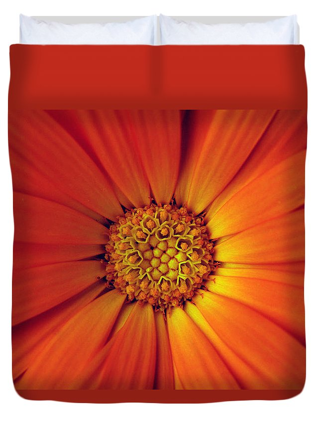 Plant Duvet Cover featuring the photograph Close Up Of An Orange Daisy by Ralph A Ledergerber-Photography