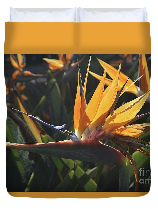 Bird-of-paradise Duvet Cover featuring the photograph Close Up Photo Of A Bee On A Bird Of Paradise Flower by DejaVu Designs