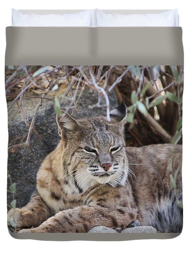 Bobcat Duvet Cover featuring the photograph Closeup of Bobcat by Colleen Cornelius