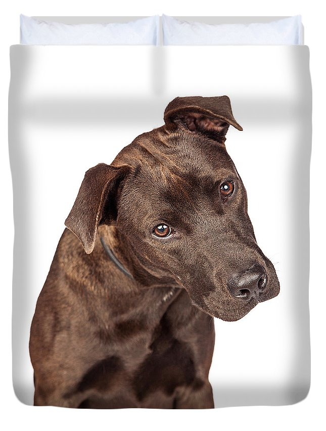 American Staffordshire Duvet Cover featuring the photograph Closeup Of Labrador Crossbreed Dog Tilting Head by Susan Schmitz