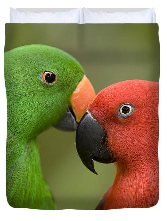Two Animals Duvet Cover featuring the photograph Closeup Of Male And Female Eclectus by Tim Laman