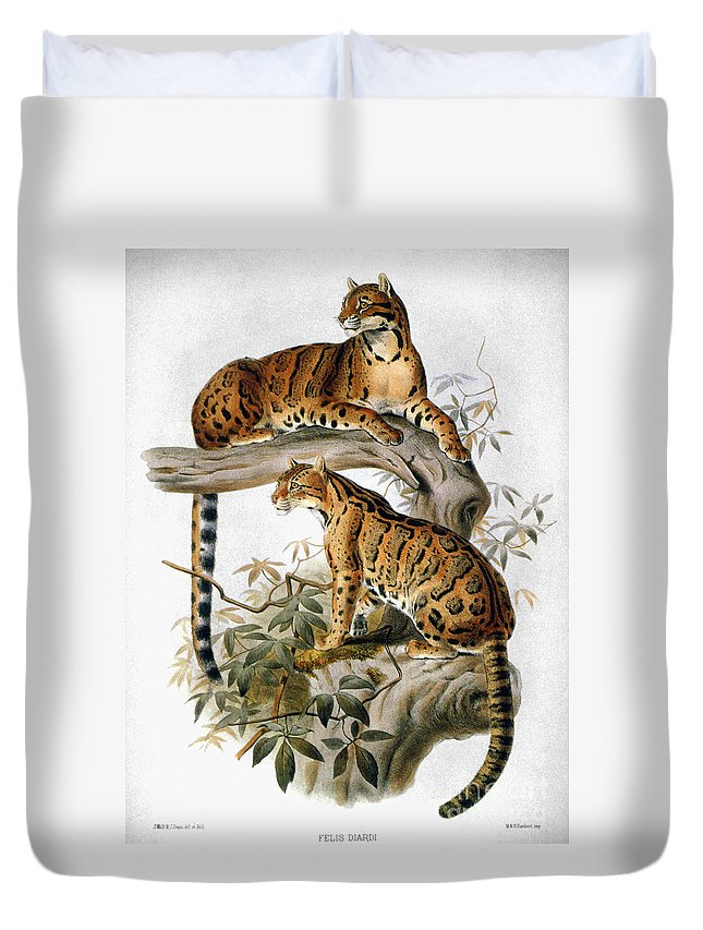 1883 Duvet Cover featuring the photograph Clouded Leopard, 1883 by Granger