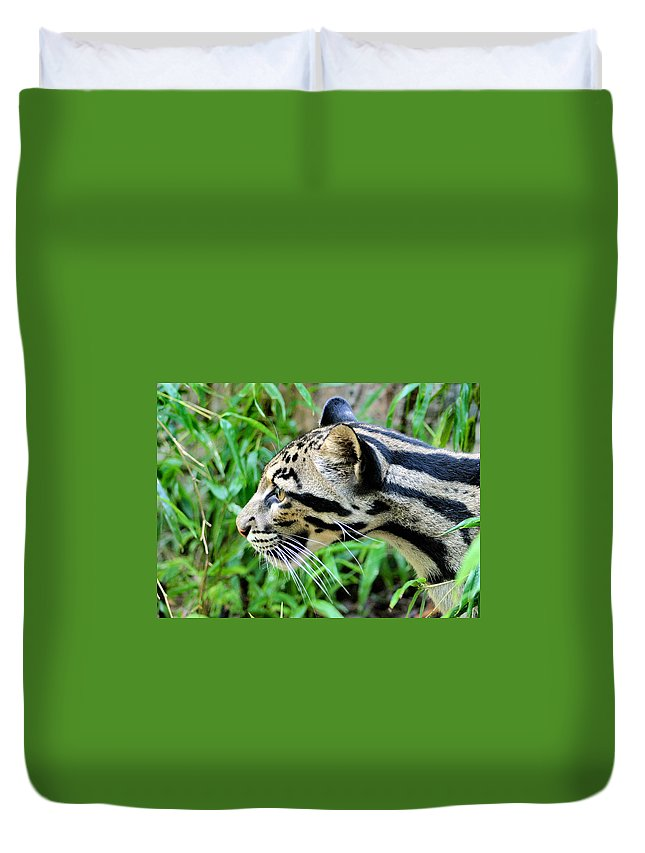 Clouded Leopard Duvet Cover featuring the photograph Clouded Leopard In The Grass by Kristin Elmquist