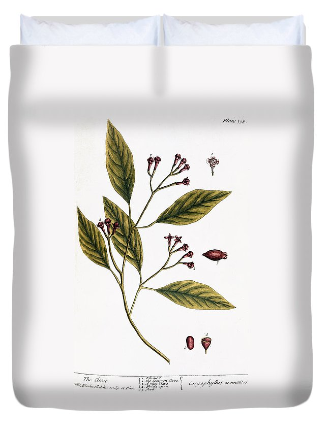 1730s Duvet Cover featuring the photograph Cloves, 1735 by Granger
