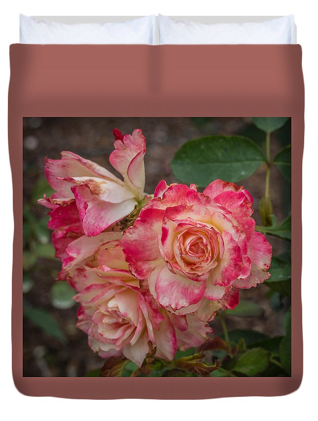 Florda Duvet Cover featuring the photograph Cluster Of Roses by Jane Luxton