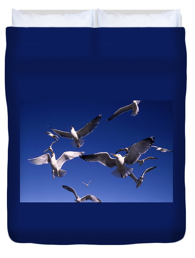 Seagull Birds Flight Duvet Cover featuring the photograph Cnrg0302 by Henry Butz