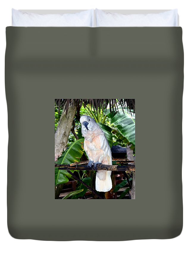 Love Cockatoo Parrot Parakeet Bird Perch Jungle Tropical Forest Pet Aviary  The Of To And A In Is It You He Was For On Are As I His Be One Or Had By We Can All Up An She Do If So Her With That They Have But Were Then Word Make Like Our Rkc Ron Ronald K Chambers Duvet Cover featuring the painting Cockatoo on Perch by Ron Chambers