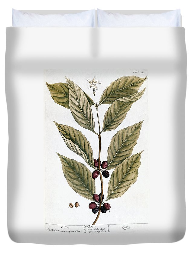 1730s Duvet Cover featuring the photograph Coffee Plant, 1735 by Granger