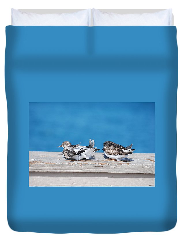Bird Duvet Cover featuring the photograph Cold Birds by Rob Hans