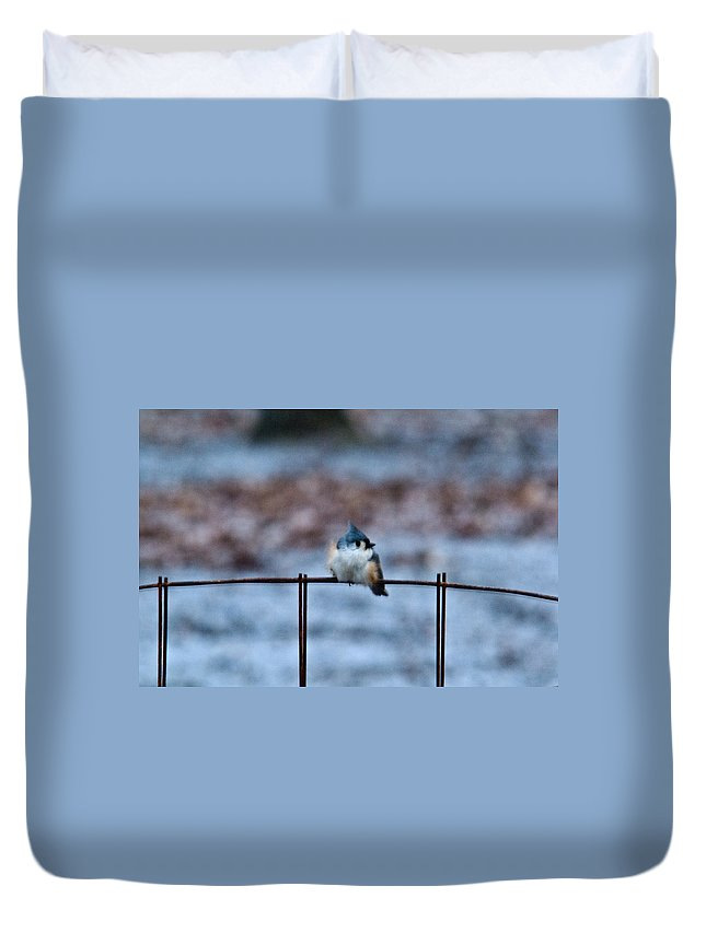 Fledging Duvet Cover featuring the photograph Cold Fledgling by Douglas Barnett