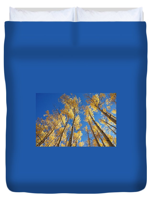 Aspen Duvet Cover featuring the photograph Colorado Aspen by Jerry McElroy
