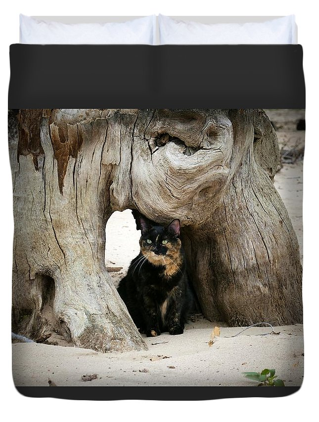 Tortoise Duvet Cover featuring the photograph Colorado Giant Tortoise by Louise Browne