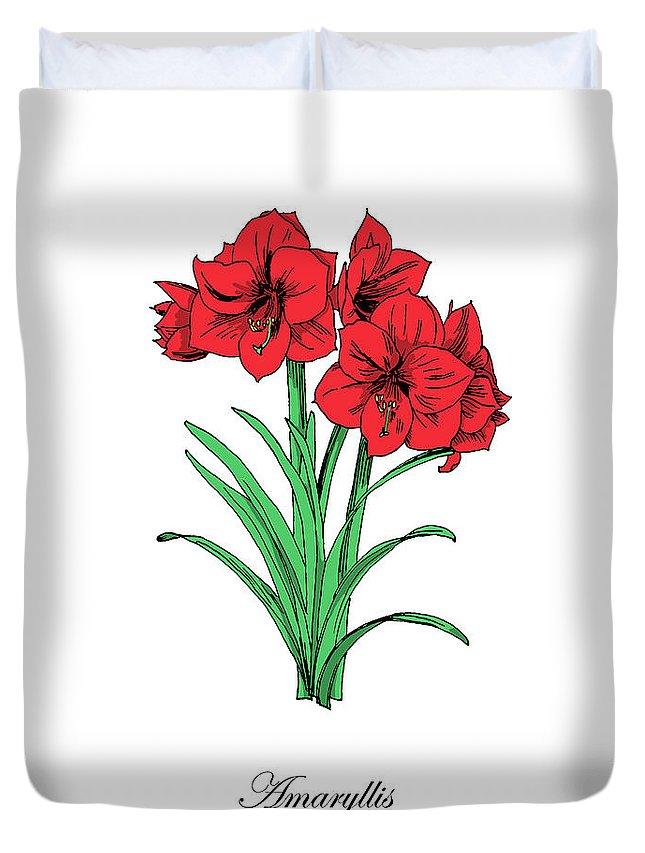Amaryllis Duvet Cover featuring the mixed media Colored Amaryllis. Botanical by Masha Batkova