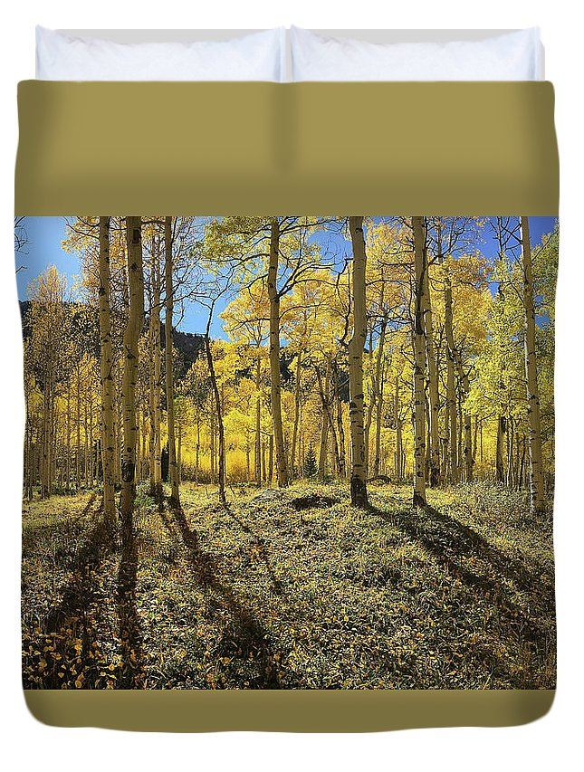Trees Duvet Cover featuring the photograph Colorful Aspens by Carol Milisen