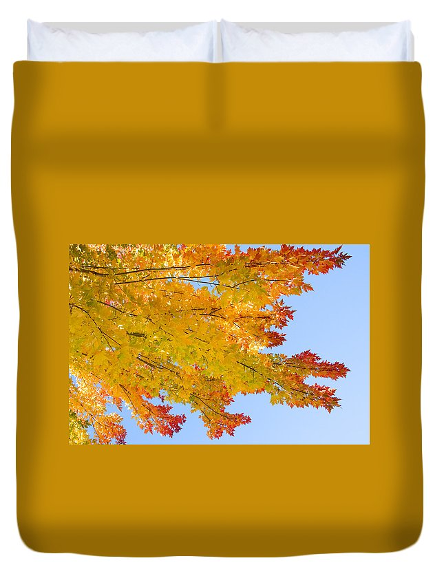 Branches Duvet Cover featuring the photograph Colorful Autumn Reaching Out by James BO Insogna