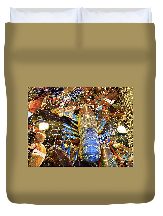 Lobster Duvet Cover featuring the photograph Colorful Blue Lobster by Allan Levin