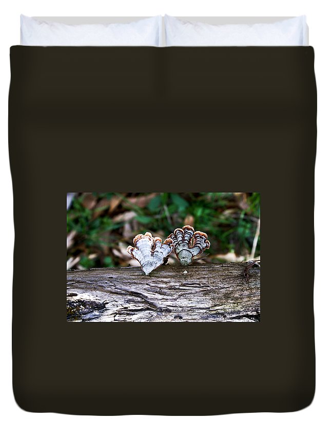 Colorful Duvet Cover featuring the photograph Colorful Bracket Fungi by Douglas Barnett