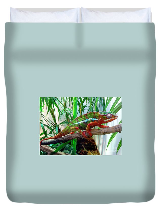 Chameleon Duvet Cover featuring the photograph Colorful Chameleon by Nancy Mueller