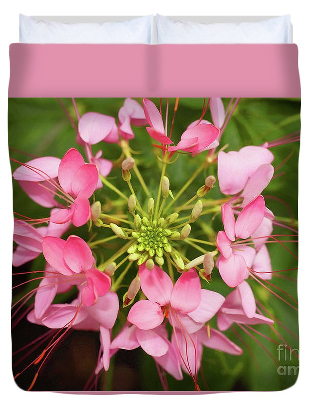 Cleome Duvet Cover featuring the photograph Colorful Cleome by Stephen Schwiesow