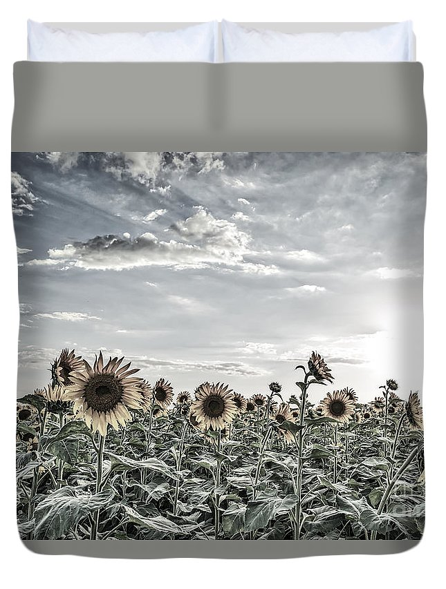 Sunflower Duvet Cover featuring the photograph Sunflowers Fields2 by Tod and Cynthia Grubbs