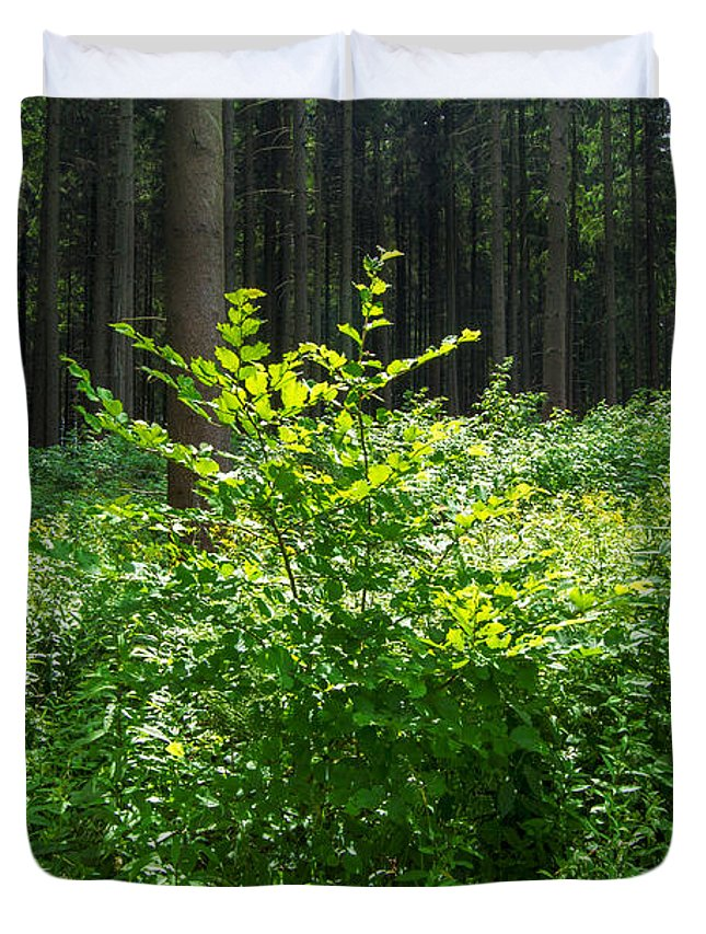 Forest Duvet Cover featuring the photograph Colors Of A Forest In Vogelsberg by Sun Travels