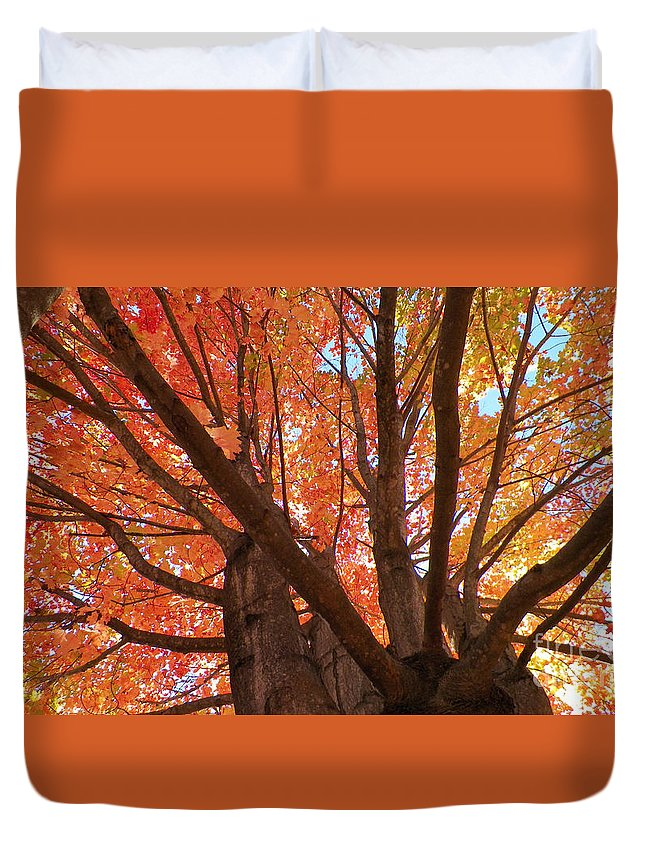 Trees Duvet Cover featuring the photograph Colors Of Fall by Gina Sullivan