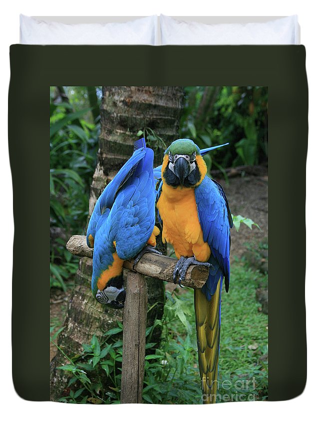 Aloha Duvet Cover featuring the photograph Colourful Macaw Pohakumoa Maui Hawaii by Sharon Mau