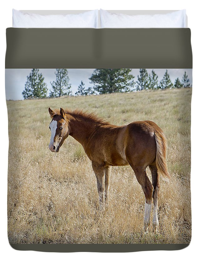 Joseph Duvet Cover featuring the photograph Colt 016 by Charles Frates