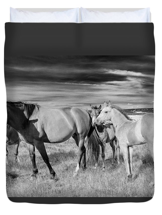 Joseph Duvet Cover featuring the photograph Colt 021 by Charles Frates