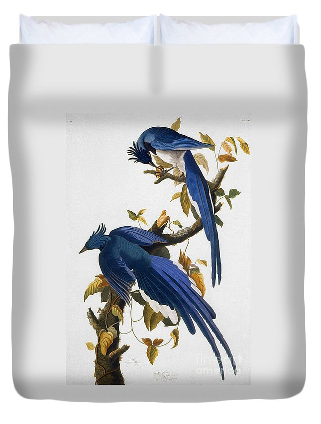 1830 Duvet Cover featuring the photograph Columbia Jay, 1830, by Granger