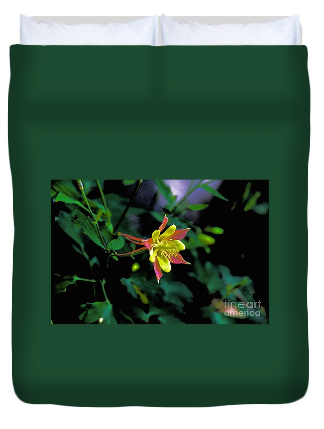 Columbine Duvet Cover featuring the photograph Columbine Outstanding Red Yellow by David Frederick