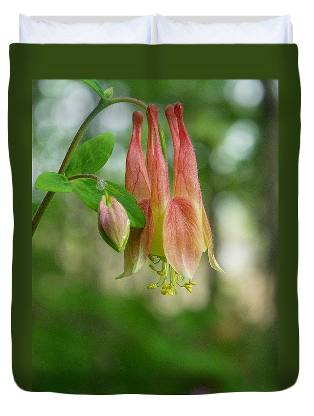 Nature Duvet Cover featuring the photograph Columbine by Peggy King