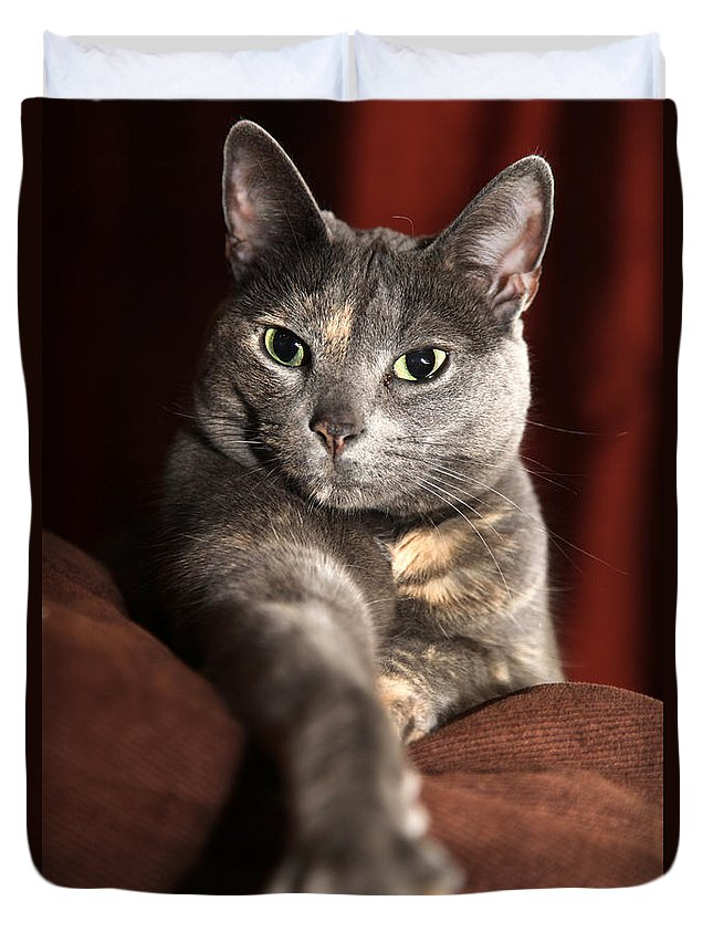 Kitty Duvet Cover featuring the photograph Come Here by Amanda Barcon