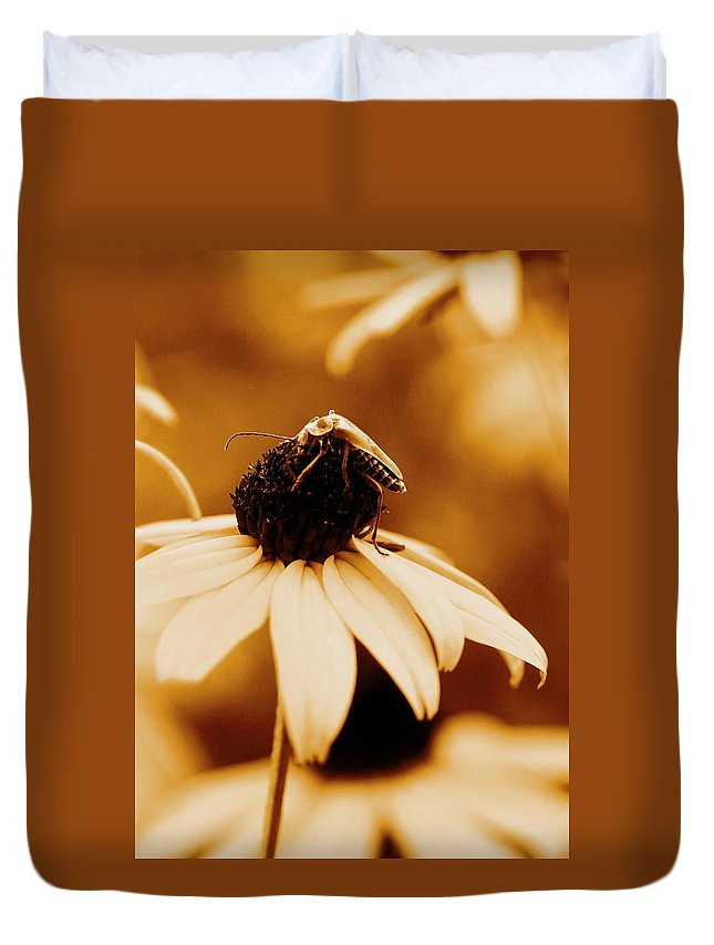Black Eyed Susan Duvet Cover featuring the photograph Comfortably Perched by Angela Rath