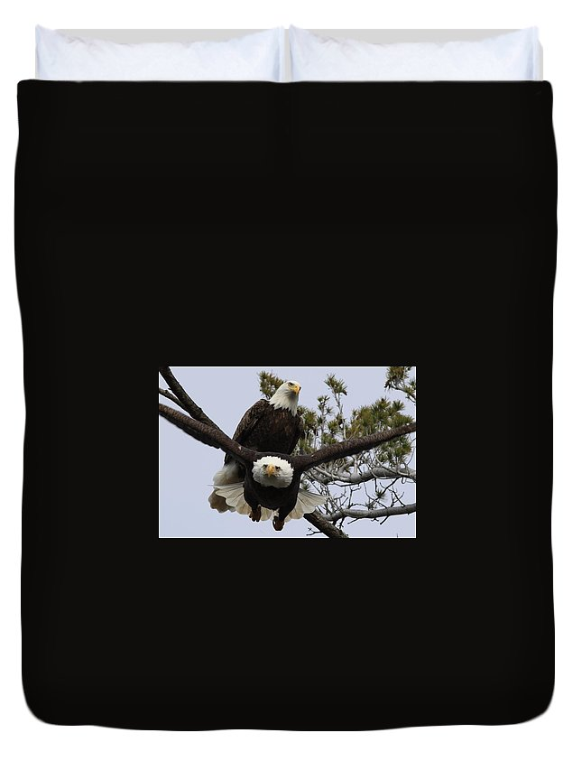 Eagle Duvet Cover featuring the photograph Coming At Me 4 by Debbie Storie