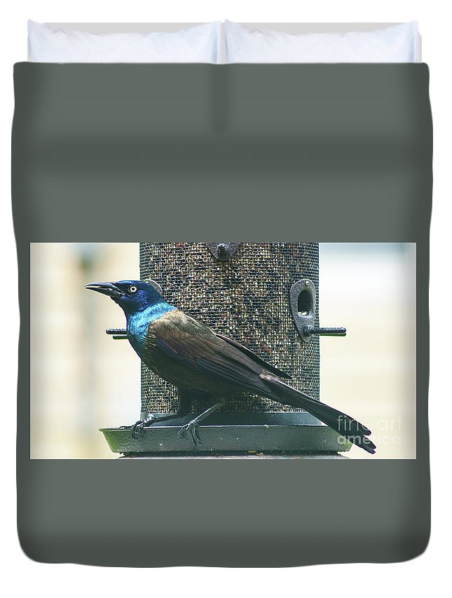Common Grackle Duvet Cover featuring the photograph Common Grackle by Robert Edgar