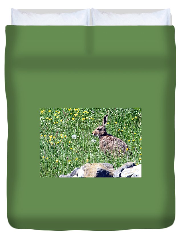 Hare Duvet Cover featuring the photograph Common Hare by Bob Kemp