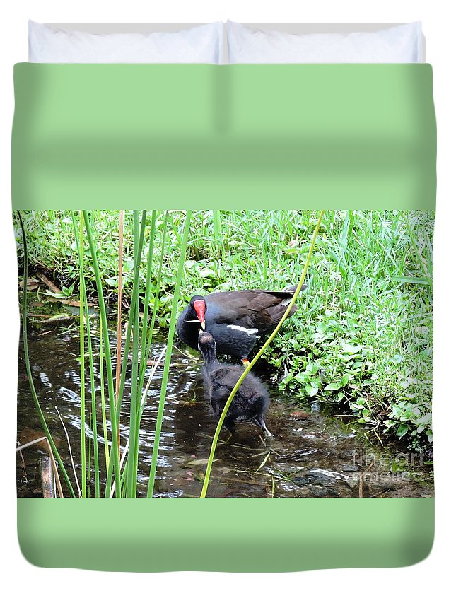 Long Toes Duvet Cover featuring the photograph Common Moorhen And Chick by Beth Williams