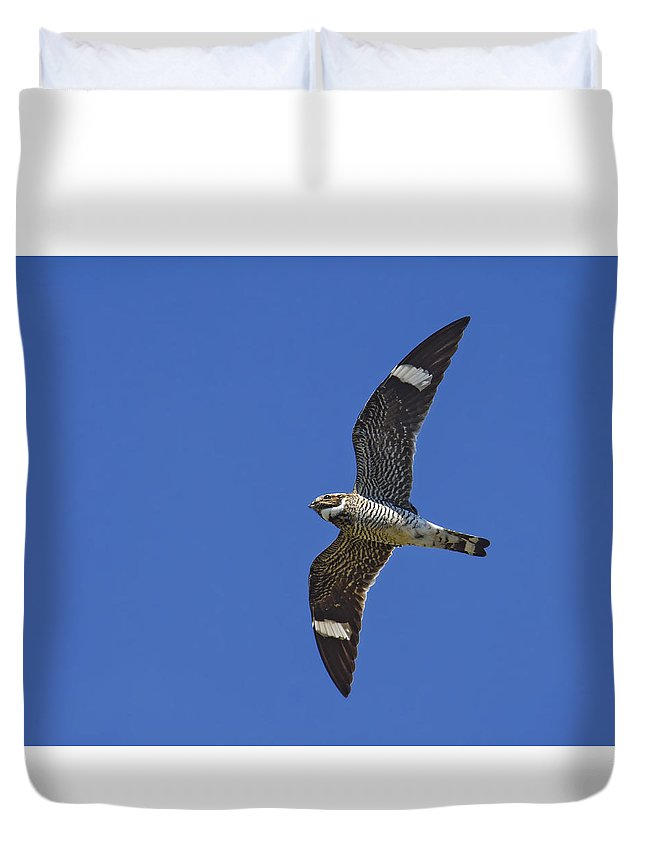 Common Nighthawk Duvet Cover featuring the photograph Common Nighthawk by Tony Beck