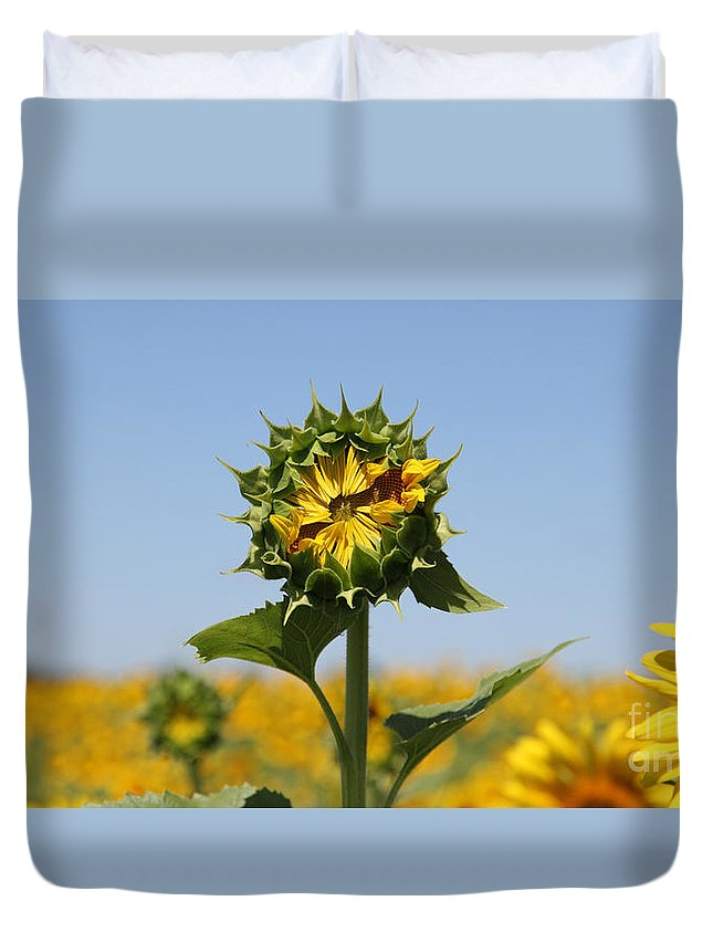 Sunflowers Duvet Cover featuring the photograph Competition by Amanda Barcon
