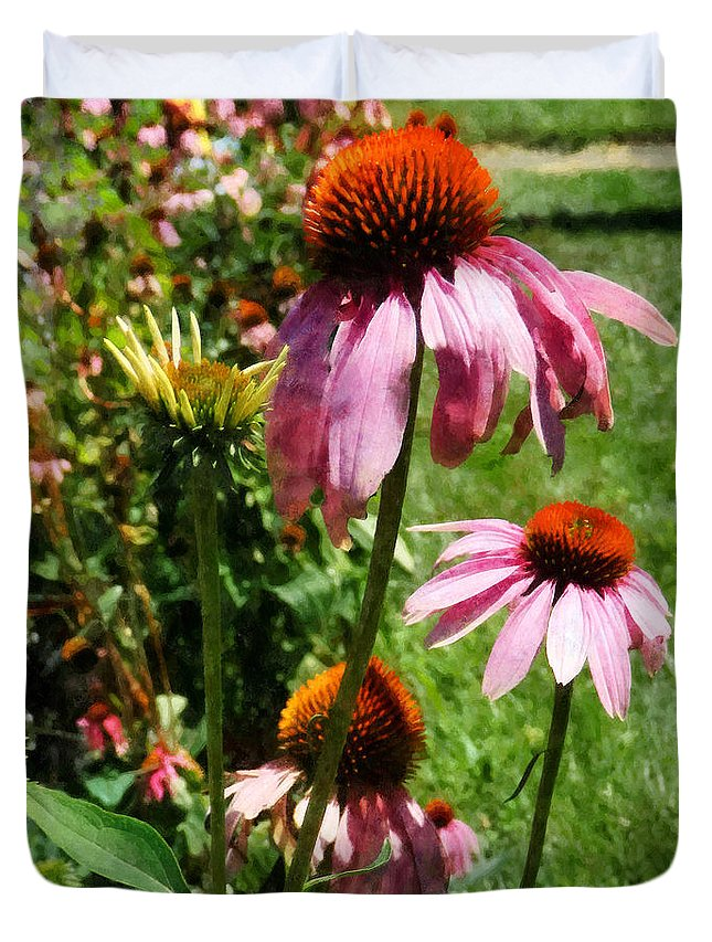 Coneflower Duvet Cover featuring the photograph Coneflowers In Garden by Susan Savad